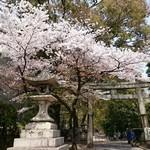 180422isathuki (aikyachi)