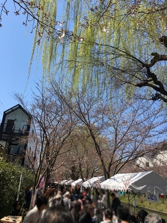 170413桜祭り (2)
